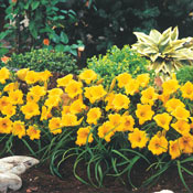 Daylily Lovers